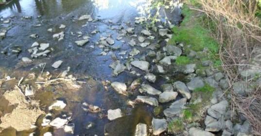 Der Fluss des Lebens
