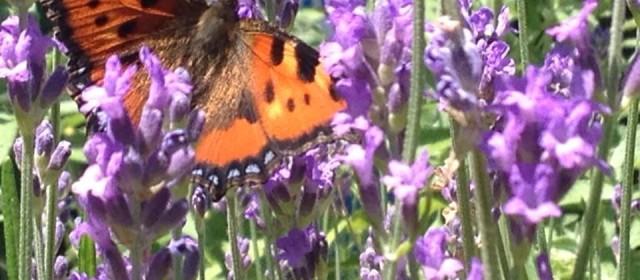 Folge dem Schmetterling…